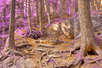 Purple Mountain Forest Trail