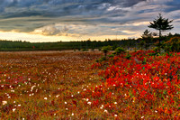 Golden Ruby Hour - Dolly Sods