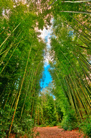 Bamboo Keyhole Forest