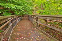 Catoctin Boardwalk Trail