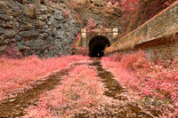 Paw Paw Tunnel - Pink Netherworld