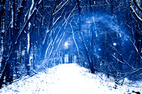Cosmic Winter Woods