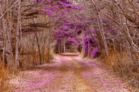 Cavendish Forest Trail - Purple Nostalgia