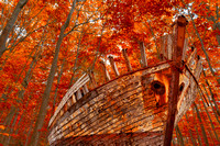 Fall Forest Shipwreck