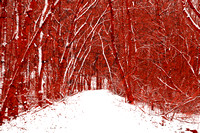 Red Winter Woods