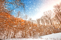 Snow Spattered Winter Forest