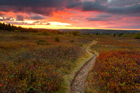 Dolly Sods Twilight Trail
