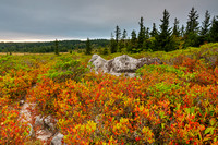 Cloudy Dolly Sods Sunset