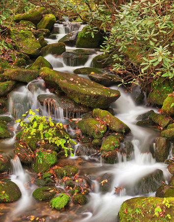 Smoky Mountain Moss Waterfall