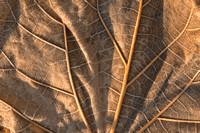 Gold Weathered Leaf
